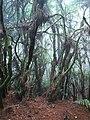 Bosque lluvioso de Cumbre Vieja (La Palma).jpg