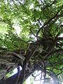 BotanicGardensPisa (22).JPG
