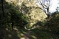 Bowral NSW 2576, Australia - panoramio (119).jpg