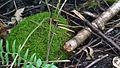 Branch and moss Mara.jpg