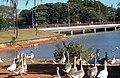 Brasília DF Brasília - Parque da Cidade Sarah Kubitschek - panoramio.jpg