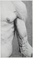 Braus 1921 169.png