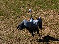 Brevard Zoo African Animals - Flickr - Rusty Clark (28).jpg