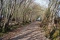 Bridleway, Ware's Wood - geograph.org.uk - 1252996.jpg