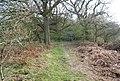 Bridleway NE of Burwash Weald - geograph.org.uk - 1253635.jpg