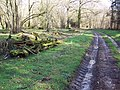 Bridleway in Grovely Woods - geograph.org.uk - 350585.jpg