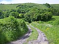 Bridleway to Didling Hill - geograph.org.uk - 1340482.jpg