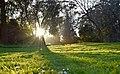 Bright Sunshine (246733893).jpeg