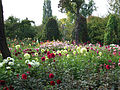 Britzer Garten Rundgang 15.jpg