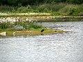 Brockholes Nature Reserve, Meadow Lake (geograph 4544623).jpg