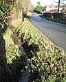 Brook beside Norton Green Lane - geograph.org.uk - 2191440.jpg