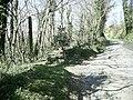 Broom Wood - geograph.org.uk - 1227684.jpg