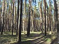 Bryansky District, Bryansk Oblast, Russia - panoramio (157).jpg