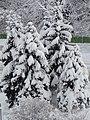 Bulgaria Някъде в София по средата на зимата - 26.01.2012. - panoramio.jpg