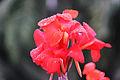 Bunga tasbih (35).jpg