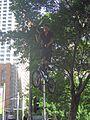 Busker at Circular Quay - Flickr - GregTheBusker.jpg