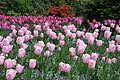 Butchart Gardens (145593855).jpg