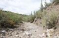 Butcher Jones Trail to Pinter's Point Loop, Tonto National Park, Saguaro Lake, Ft. McDowell, AZ - panoramio (153).jpg