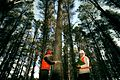 CSIRO ScienceImage 2671 Measuring the girth of a Radiata Pine.jpg