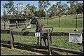 Caboolture Historical Village Goat Compound-1 (35495149731).jpg