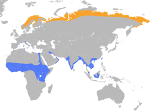 Calidris temminckii distribution map.png