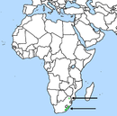 Range includes: Angola; Botswana; Burundi; Cameroon; Democratic Republic of the Congo; Côte d'Ivoire; Gambia; Ghana; Guinea; Guinea-Bissau; Liberia; Malawi; Mozambique; Namibia; Nigeria; Rwanda; South Africa; Swaziland; Tanzania; Togo; Uganda; Zambia; Zimbabwe.
