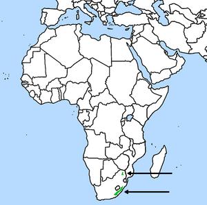 Cape parrot - Image: Cape Parrot, range