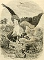 Cassell's natural history (1854) (14563679880).jpg