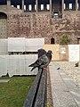 Castello sforzesco02.jpg