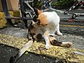Cats in t1302Cats in the Philippines 15.jpg