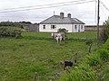 Cattle and bungalow near Doohooma-Dumha Thuama - geograph.org.uk - 1879016.jpg
