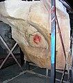 Caverne du Pont d Arc P1010132mod.jpg