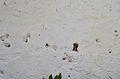 Cementeri de Dénia, impactes de bala dels afusellaments.JPG