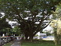 Centro Medico Docente La Trinidad (CMDLT) 2012 007.jpg