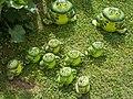 Ceramic house, frogs in Gyenesdiás, 2016 Hungary.jpg