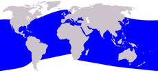 .::Delfín nariz de Botella::. 230px-Cetacea_range_map_Bottlenose_Dolphin