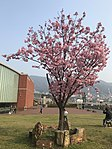Cherry blossoms near Yamato Museum.jpg