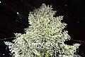 Christkindlmarkt - Swarovski crystal Christmas Tree at Zurich Train Station (Ank Kumar) 01.jpg