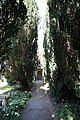 Church of St Michael, Leaden Roding, Essex, England - south porch along yew avenue.jpg