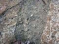 Clast-rich impact pseudotachylite (Sudbury Breccia, Paleoproterozoic, 1.85 Ga; Windy Lake Northwest roadcut, Sudbury Impact Structure, Ontario, Canada) 74 (46969122964).jpg