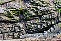Coastline St John Newfoundland (41321594502).jpg