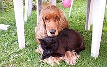 Hond Wikipedia