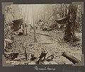 Collectie NMvWereldculturen, RV-A102-1-169, 'Panapikamp'. Foto- G.M. Versteeg, 1903-1904.jpg