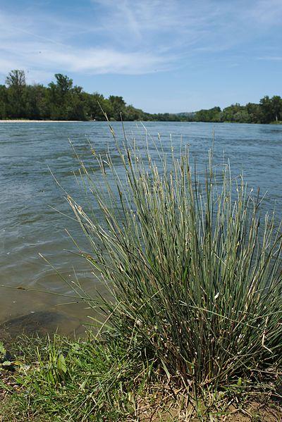 Vue de la confluence Garonne-Ariège