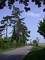 Conifer-lined road - geograph.org.uk - 801749.jpg