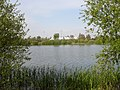 Conningbrook Lake - geograph.org.uk - 411359.jpg