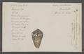 Conus capitaneus - - Print - Iconographia Zoologica - Special Collections University of Amsterdam - UBAINV0274 086 08 0016.tif