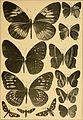 """Correspondenz-blatt des Entomologischen Vereins """"Iris"""" zu Dresden (1884) (20512287438).jpg"""