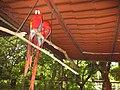 Costa Rica (6094789386).jpg