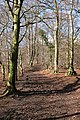 Cotswold Way on Wotton Hill - geograph.org.uk - 42729.jpg